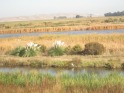 an expanse of loveliness in the wetland (author photo)