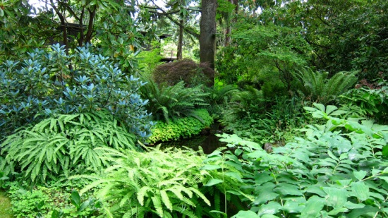 The depths of mature plantings at Dunn Gardens, Seattle (Credit: Susan Barsy)