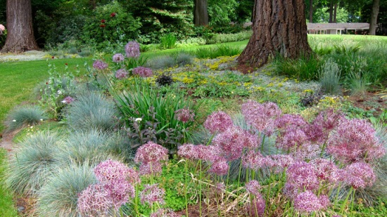 Grasses & flowers in Dunn Gardens, Seattle (Credit: Susan Barsy)