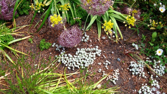 Textures in the beds of Dunn Gardens, Seattle (Credit: Susan Barsy)