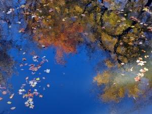 Autumn drifted past, © 2014 Susan Barsy