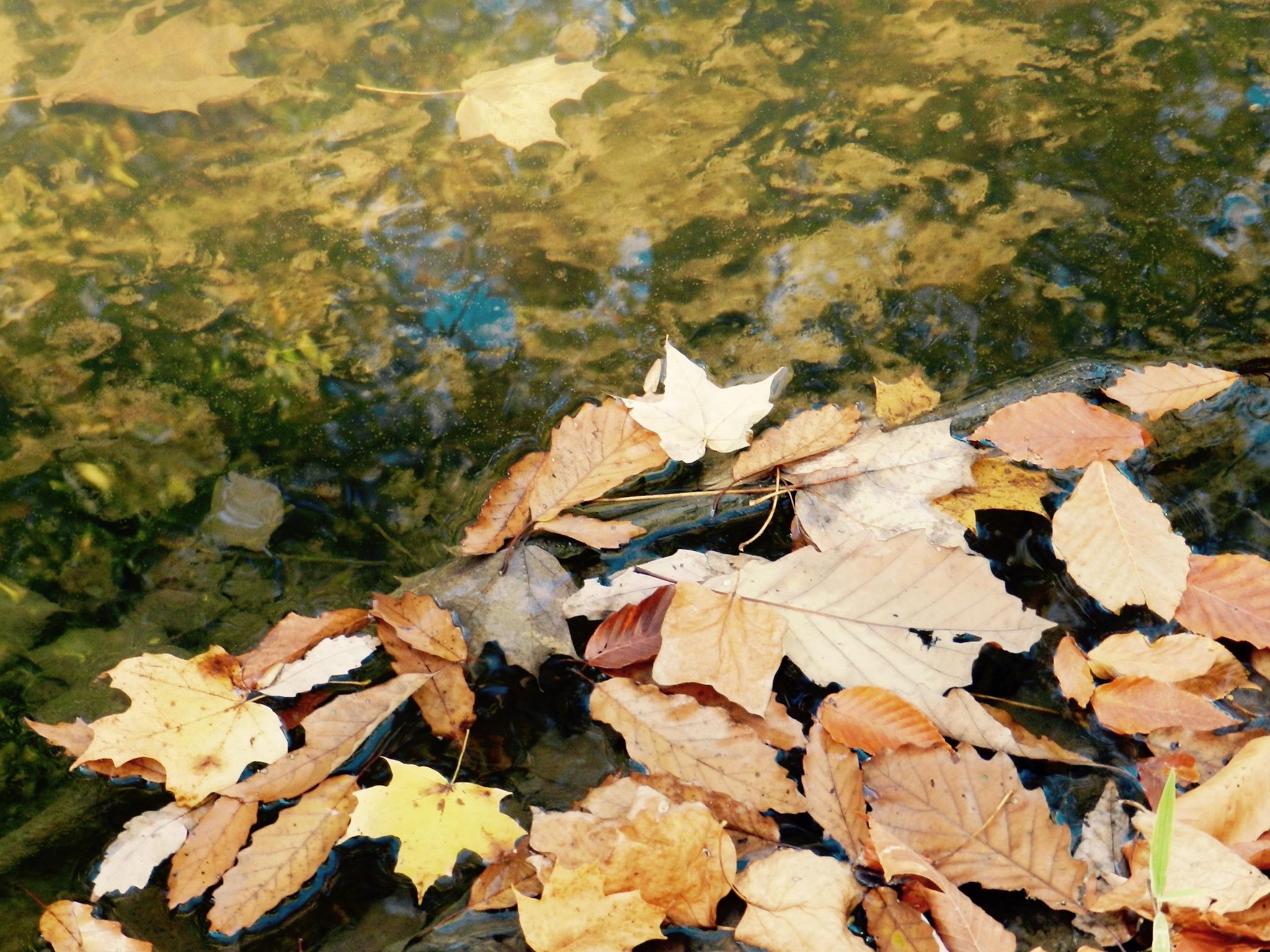 Banked leaves, © 2015 Susan Barsy