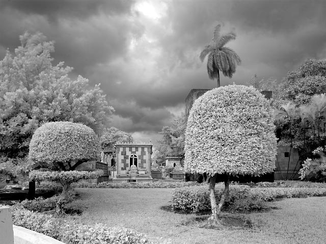 Black-and-white print showing the mature topiary of the grounds under a stormy sky.