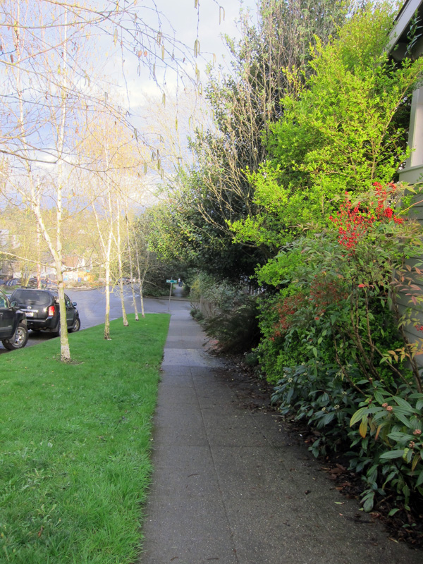 A spring sidewalk in Seattle after a rain.