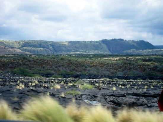 Lava grass (the Big Island, Hawaii). © 2014 Susan Barsy