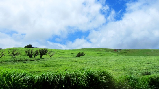 The landscape suddenly turns lush with green.