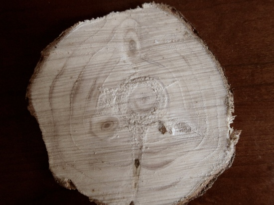 photograph of a slice from our Christmas tree.