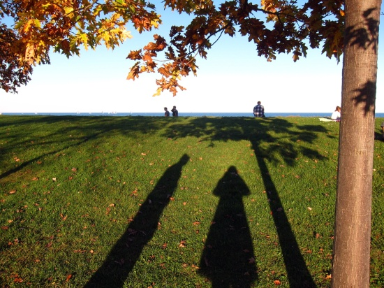 The shadow of a man and woman standing under a tree in autumn along the shore of Lake Michigan.